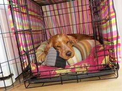 Provide a safe place for your dogs to rest.